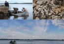 В Саратовской области в акваторию Волги выпустили молодь стерляди