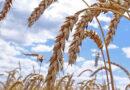 В Саратовской области экспорт продукции АПК достиг 220 млн долларов